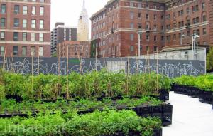 Urban farming in the city
