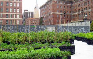 Urban farming in the city