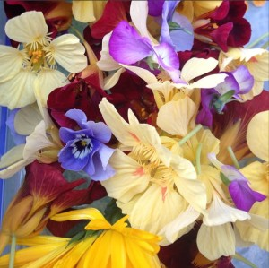 Edible beauties nasturtium, viola, calendula